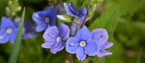 foto digitali botaniche