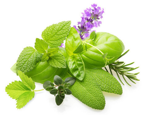 piante officinali per fitoterapia