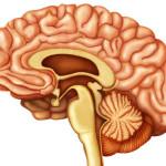 trasmissione elettrica cervello
